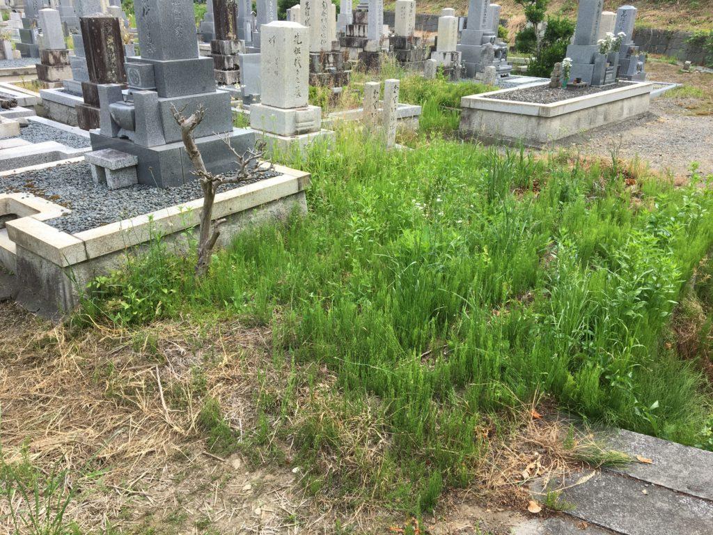 墓地の施工前